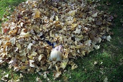 1993_09-13-leaves