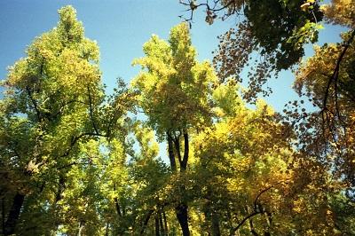 1999_10_21 7 Skyline Drive