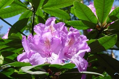 2004_05_16 26 Flowers