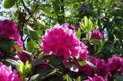 2004_05_16 35 Flowers