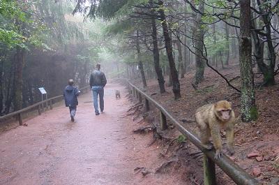 2004_10_08 5 Monkeys